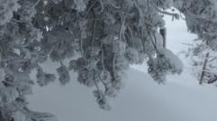 die Freuden des Winters