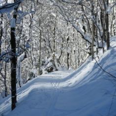 durch den Wald nach Elm