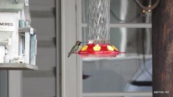 ein lustiger Kolibri